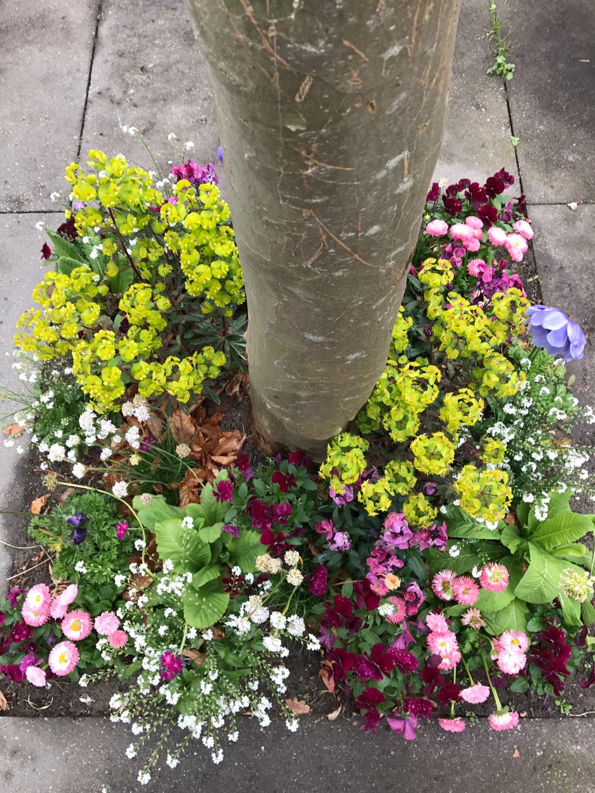 boomspiegel voorjaar